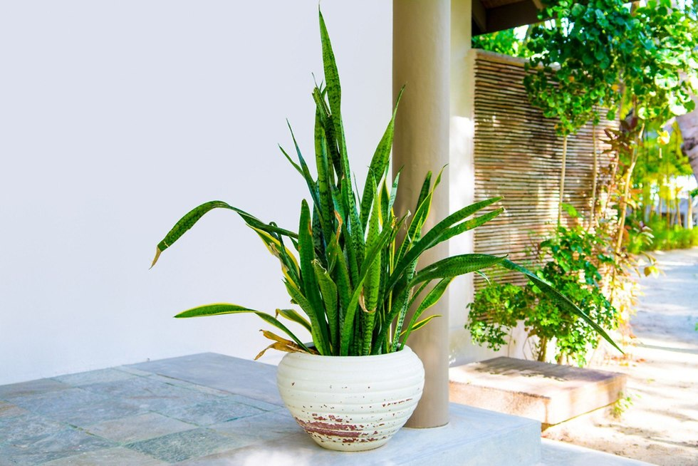 צמח (צילום: shutterstock)