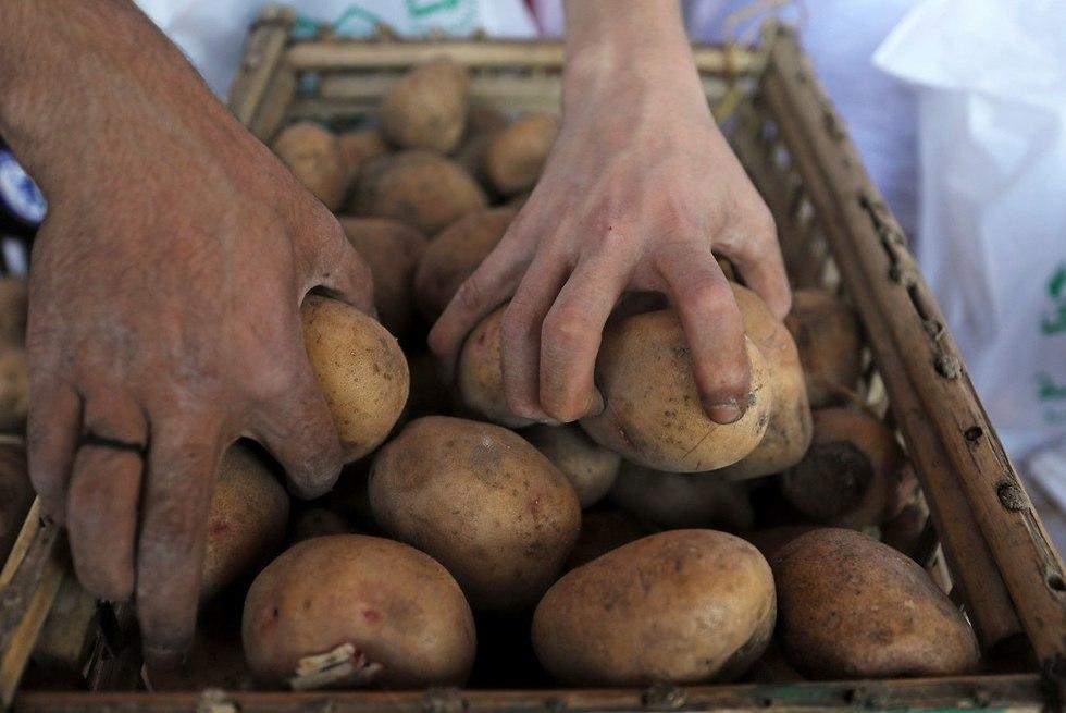 מצרים מחסור ב תפוחי אדמה (צילום: רויטרס)