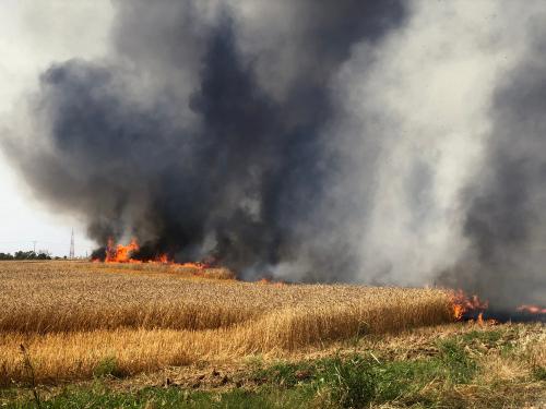 Пожар на юге, вызванный огненным террором из Газы. Фото: shutterstock