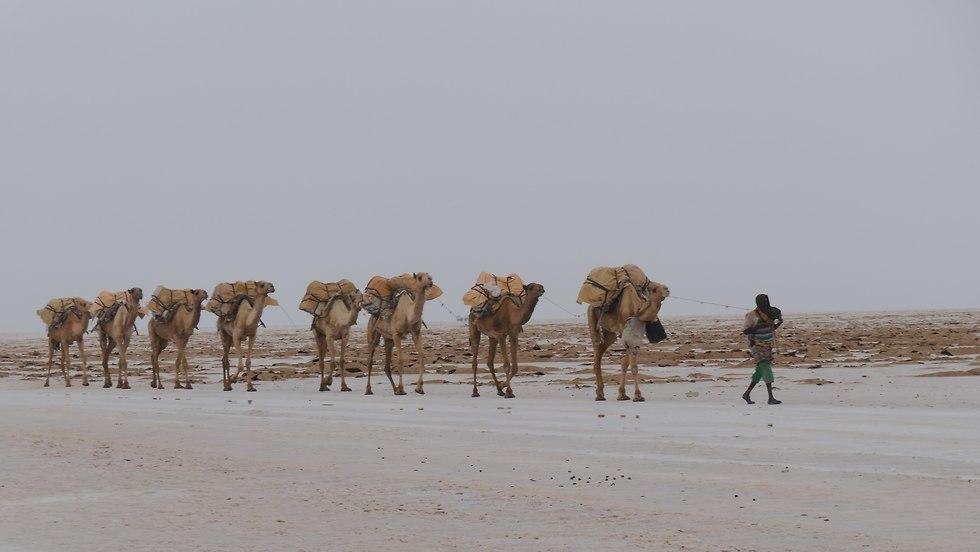 מסע באתיופיה (צילום: אליק שחף)