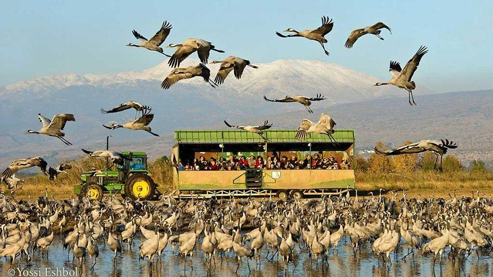 Туристическая тележка на озере Хула. Фото: Йоси Эшболь