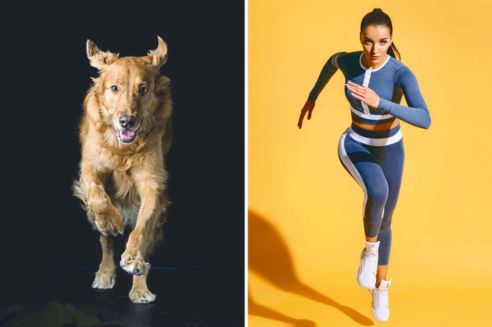 אינסטינקט בסיסי. בניגוד לבני האדם, החיות זזות כל יום כל היום, כל החיים ובכל גיל (צילום: Shutterstock)