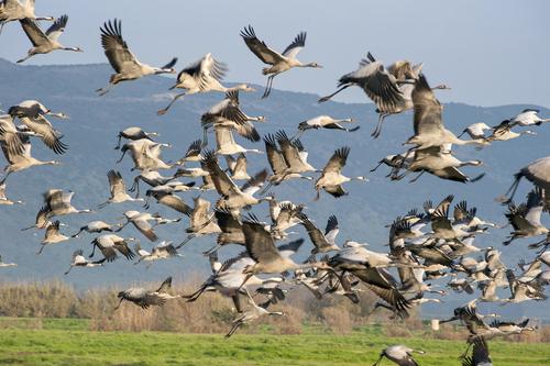 Сезон перелетных птиц в Израиле: где посмотреть на стаи