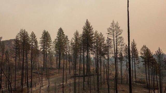 נשקי השריפה בפארדייס (צילום: EPA)