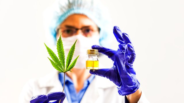 medical cannabis  (Photo: Shutterstock)