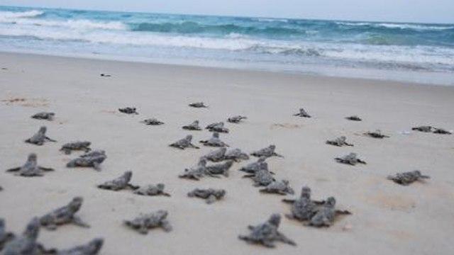 צבי ים דרומית לחיפה (צילום: רשות הטבע והגנים)