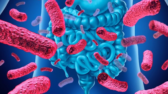 Intestinal bacteria animation