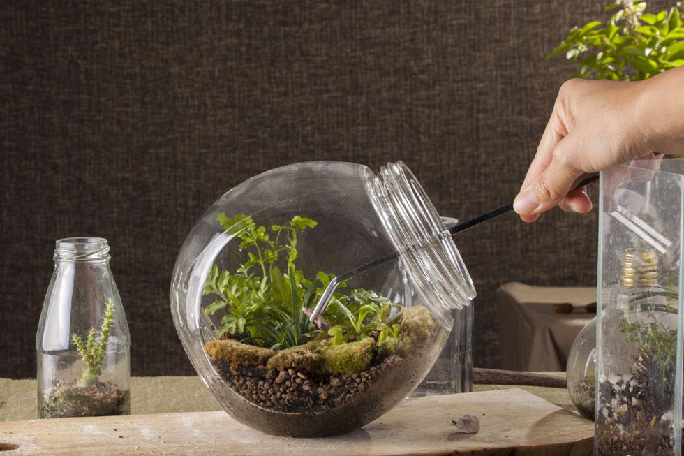 אפשר להשתמש בסוקולנטים או בצמחי אוויר (צילום: Shutterstock)