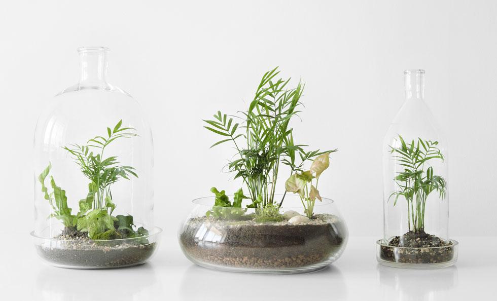 מרבית הצמחים זקוקים לכמות אור בינונית. לכן כדאי למקם את הטרריום בקרבת חלון צפוני, ולעולם לא במקום החשוף לשמש ישירה (צילום: Shutterstock)