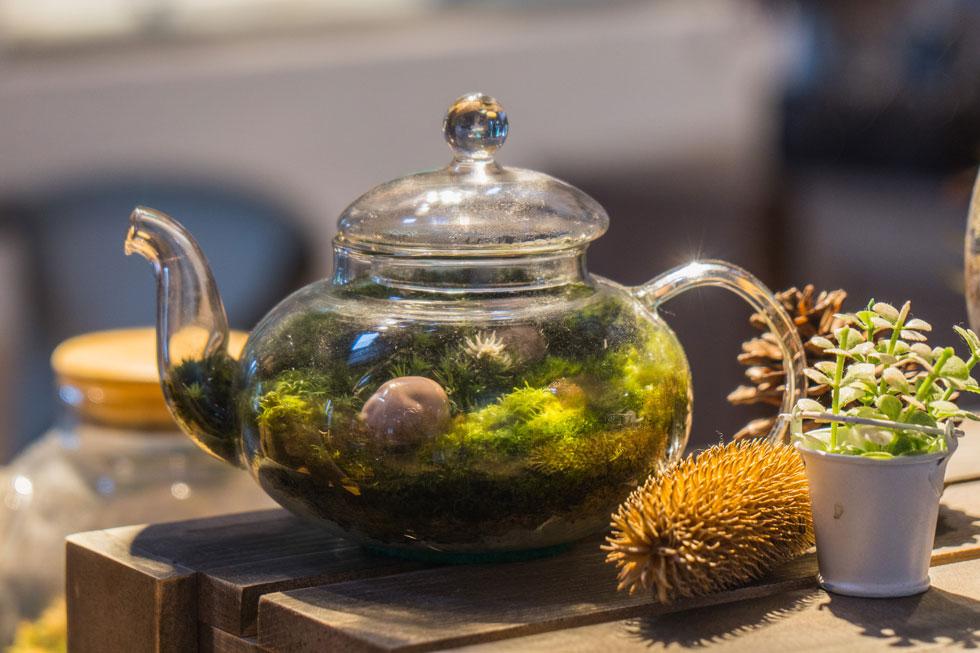 טרריום מאפשר לנו לגדל בקלות צמחים קטנים, שאינם מסתגלים היטב ובקלות לתנאי הבית (צילום: Shutterstock)