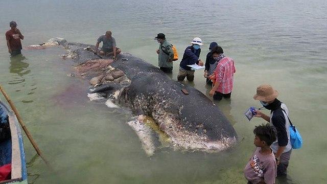 פגר הלווייתן (צילום: רויטרס)