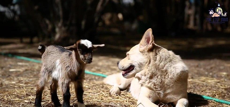בעלי חיים משוקמים בחוות קרן אור (חוות קרן אור)