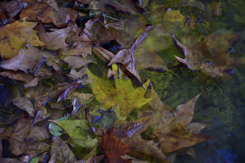 שלכת בעין חמד (צילום: קובי חזן, רשות הטבע והגנים)