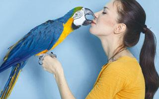 מנטה (צילום: Shutterstock)