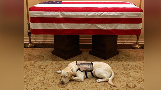 הכלב של ג'ורג' בוש האב ליד הארון שלו ארה