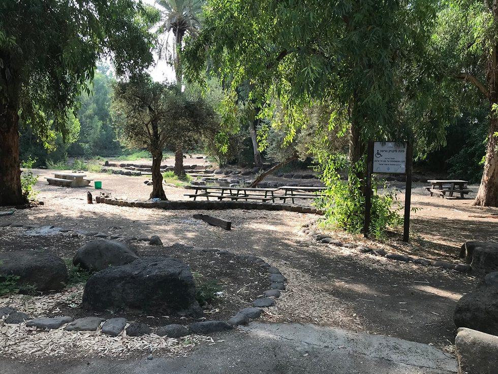 פינות פיקניק מונגשות בפארק הירדן (צילום: ארכיון הצילומים של קק
