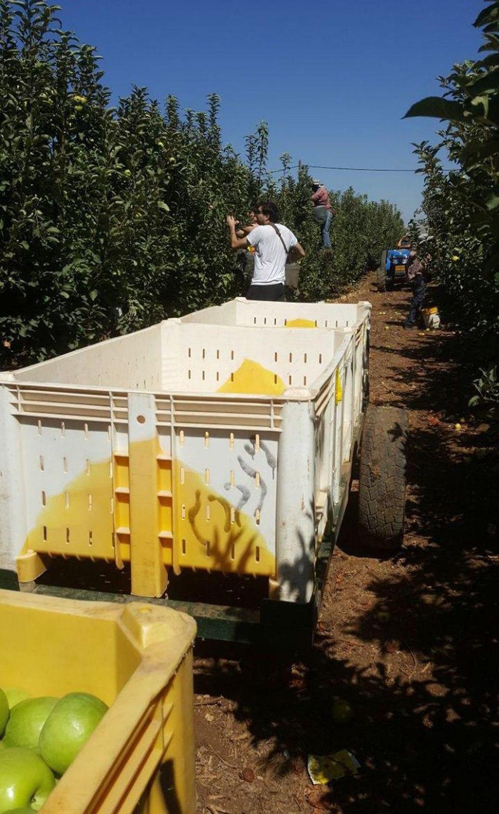 מטע התפוחים של לבב ויינברג, בשטחו נמצאה מנהרת טירור של חיזבאללה (צילום: ענת ויינברג)