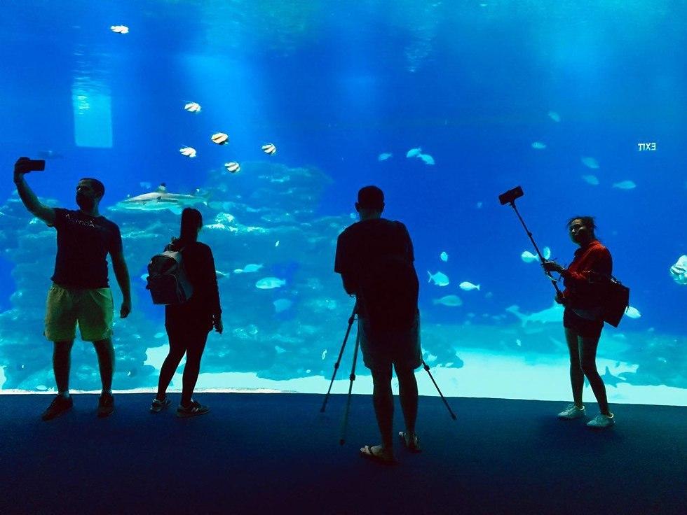 האגף החדש במצפה התת-ימי (צילום: שירי הדר)
