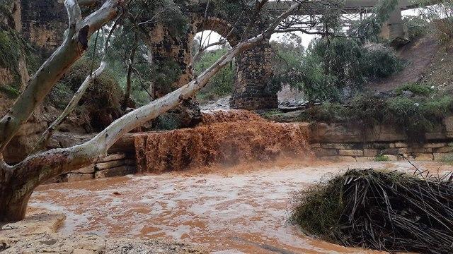 חל חרוד באזור ניר דוד (צילום: זהר גלר, דוברות התנועה הקיבוצית)