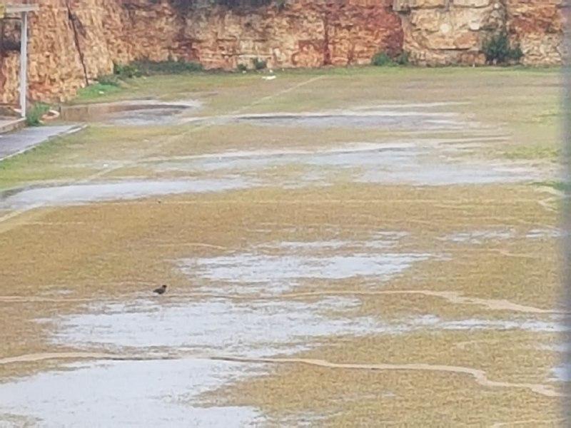 המגרש המוצף בגבעת זאב (צילום: ההתאחדות לכדורגל)