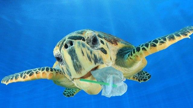 צב ליד פסולת פלסטיק (צילום: shutterstock)