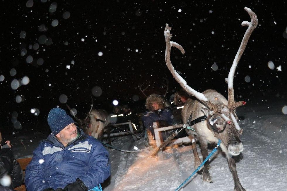 מסע במזחלות המסורתיות הרתומות לאיילים של אנשי הסאמי (צילום: זאב ינאי)