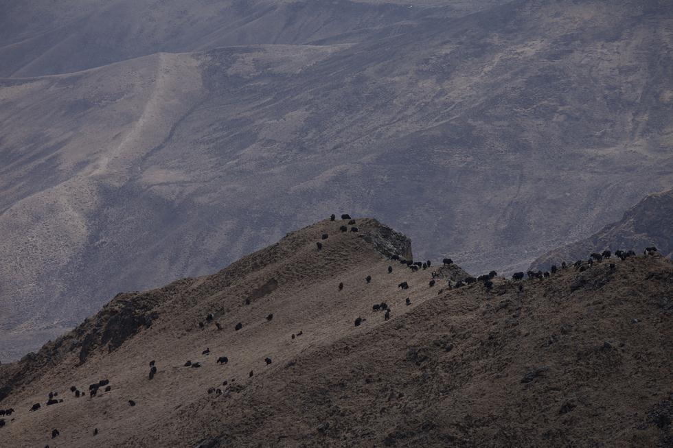 מסע עם היאקים בהימלאיה (צילום: BBC   מתוך פלאי כדור הארץ, כאן 11)