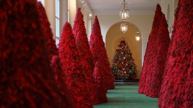 עצי אשוח אדומים בבית הלבן, לקראת חגיגות חג המולד (צילום: AP)