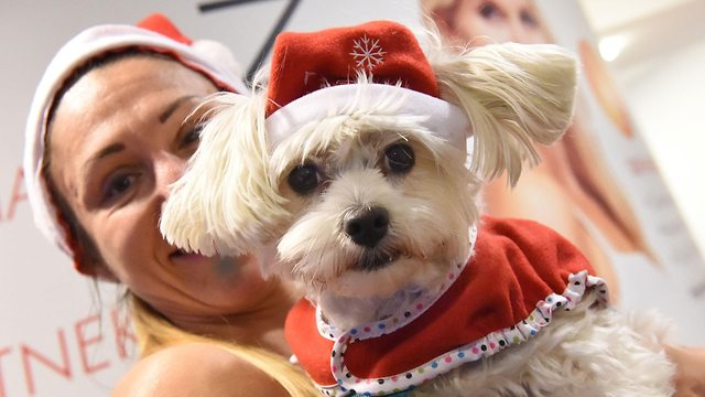כלב בתחפושת של סנטה קלאוס לקראת חג המולד (צילום: AFP)