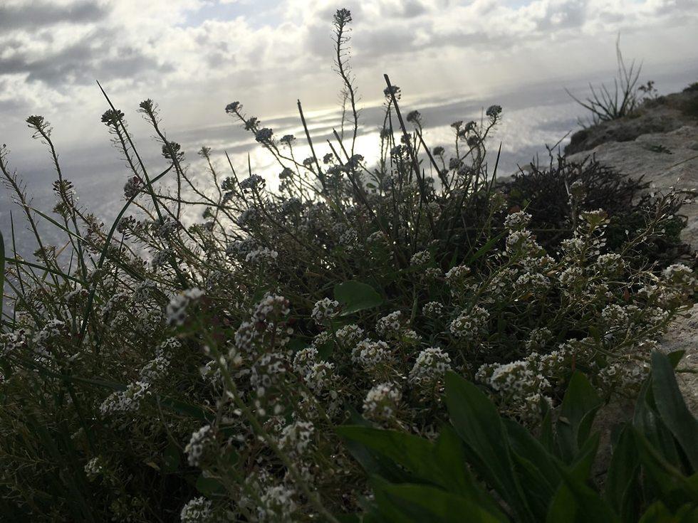 צוקי דינגלי (צילום: גלעד כרמלי)