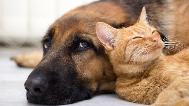 שחתול וכלב מתכרבלים יחד ()