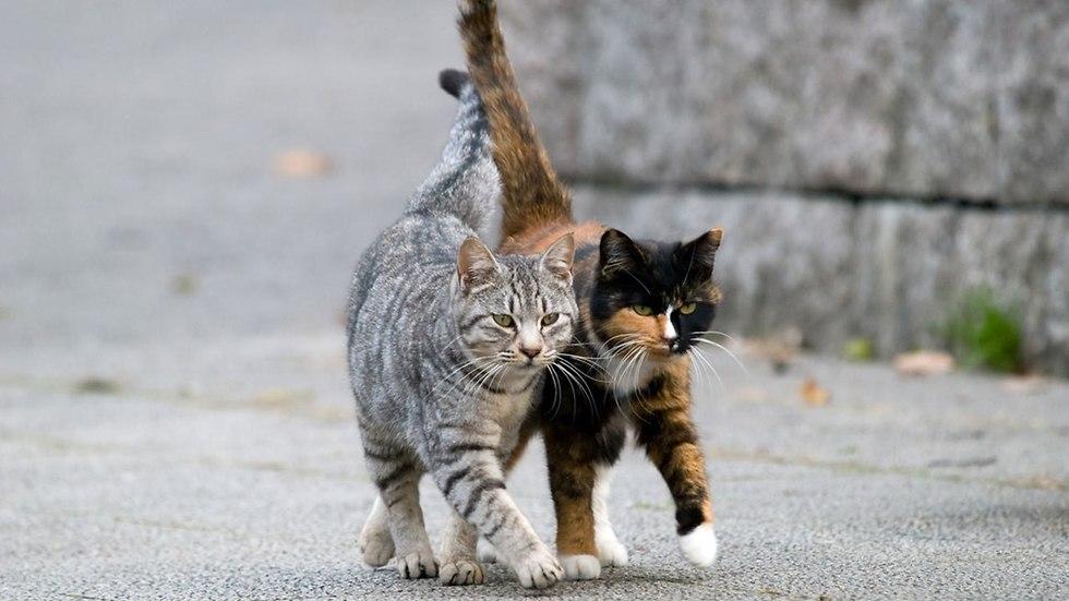 חתולי רחוב (צילום: shutterstock)