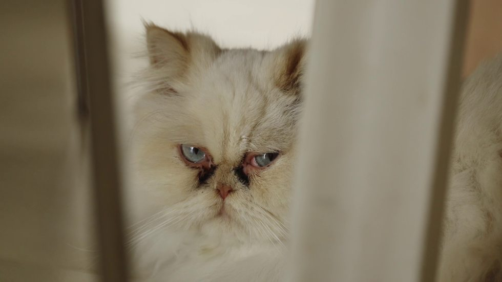 חתול (צילום: ארז ארליכמן)