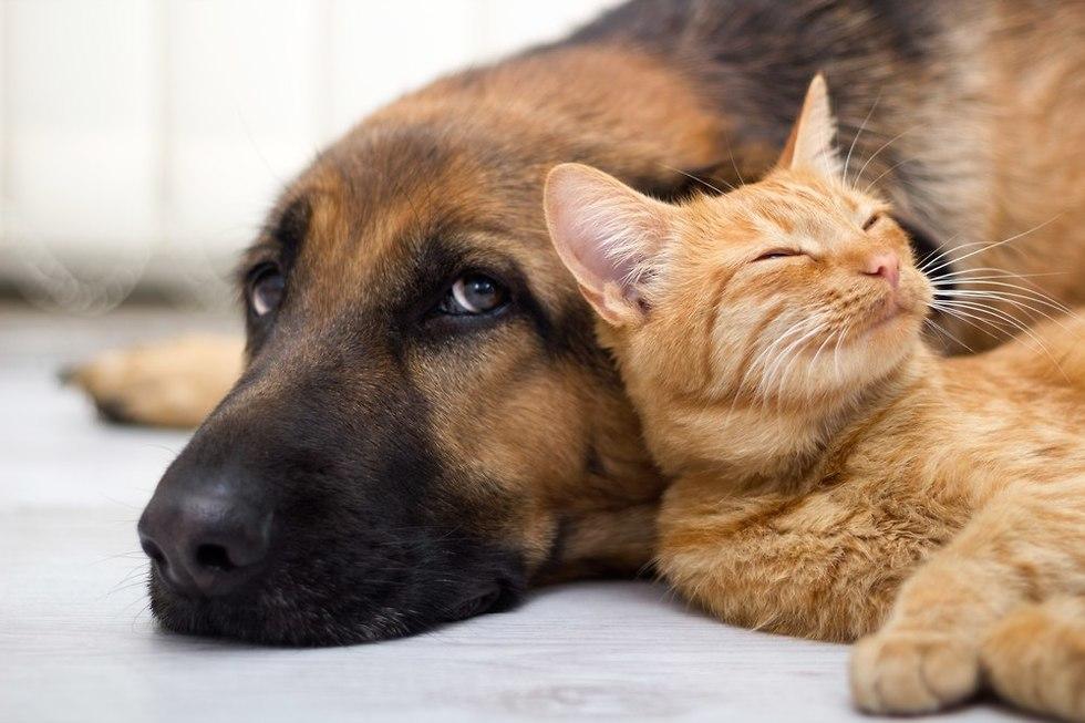 כלב וחתול (צילום: shutterstock)