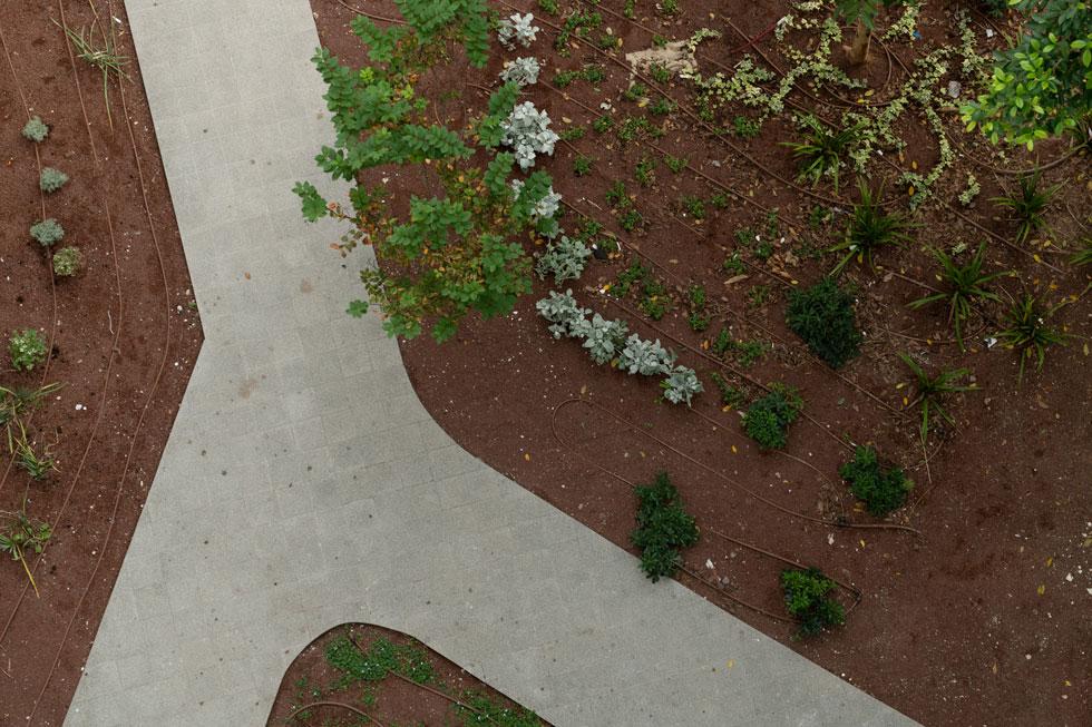 מבט מלמעלה על הגינה. קומת העמודים איפשרה גינה רציפה וגדולה יותר. ''חלל חצי-ציבורי חצי-פרטי'', מסביר האדריכל אמנון רכטר, נכדו של זאב (צילום: גדעון לוין)
