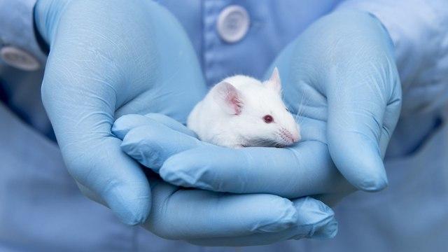 עכבר (צילום: shutterstock)