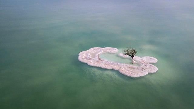 ״העץ הבודד״ בים המלח (צילום: אריק דנינו)