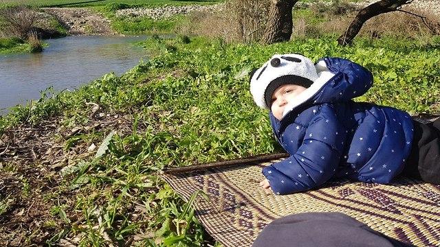 פנדה נצפתה בנחל תנינים (צילום: קרן נתנזון)