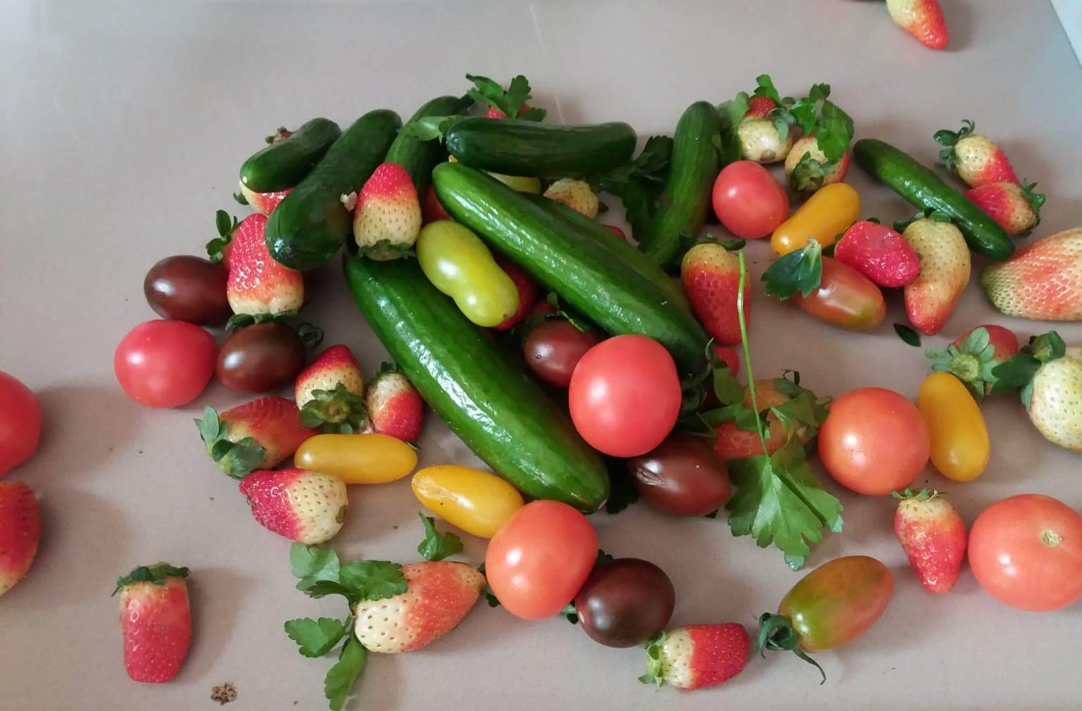 """Этот урожай был собран корреспондентом """"Вестей"""" лично в одном из хозяйств. Фото: Анастасия Тадсон"""