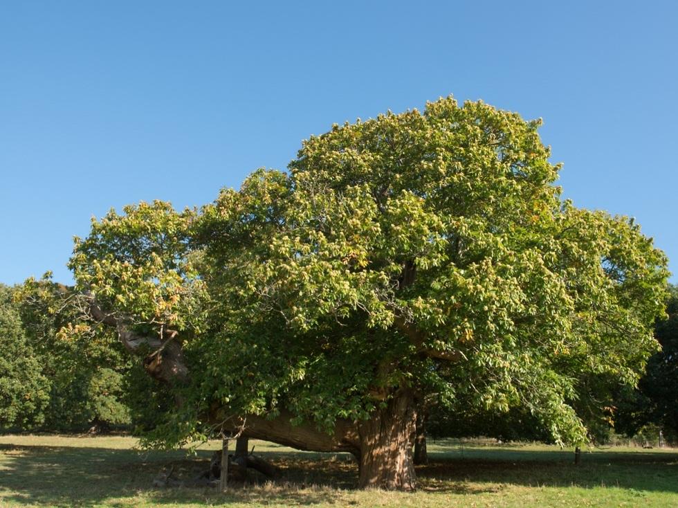 עץ בודד (צילום: shutterstock)