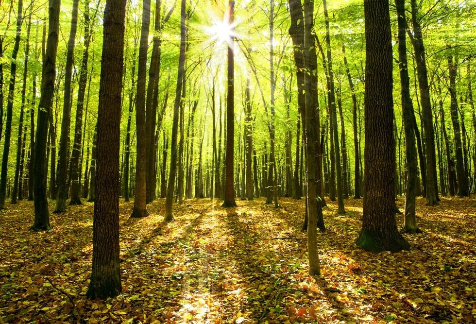 עצים (צילום: shutterstock)