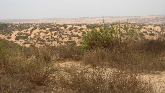 החממות הנטושות בעוטף עזה (צילום: עמית מנדלסון, החברה להגנת הטבע)