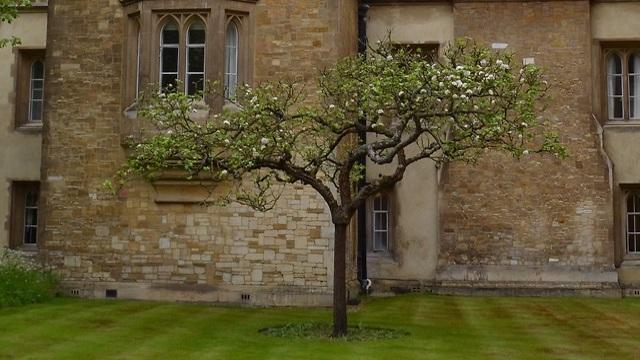 עץ כמו של ניוטון בקיימברידג' (צילום: shutterstock)