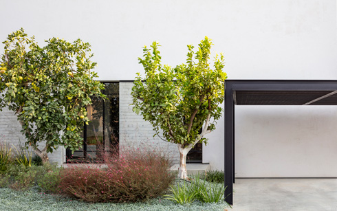 חניה מקורה בקדמת הבית, ועצים שמסתירים מעט את החלונות האורכיים (צילום: עמית גרון)