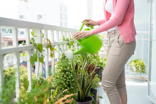 Одной воды растениям мало, их нужно удобрять. Фото: shutterstock