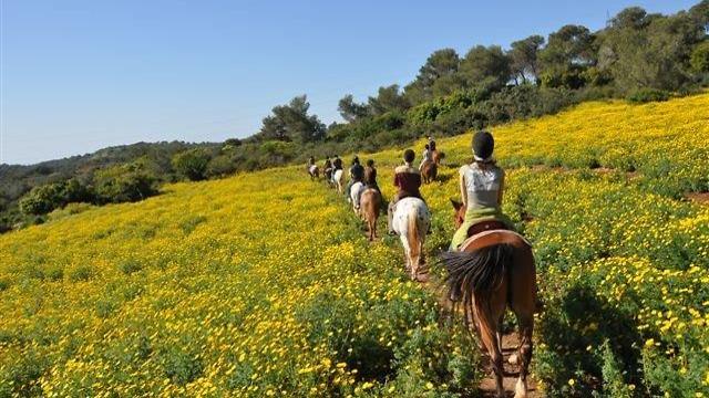 חוות סוסים, עמותת כרמלים (צילום: עמותה לתיירות כרמלים)