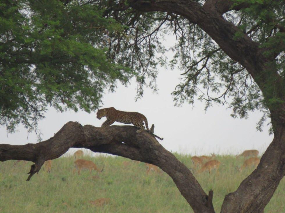 מסע אפריקן דרייב (צילום: אופיר גבולי)