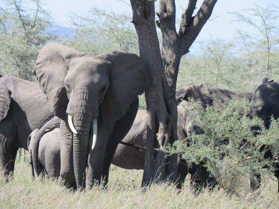 מסע אפריקן דרייב באפריקה (צילום: אופיר גבולי)
