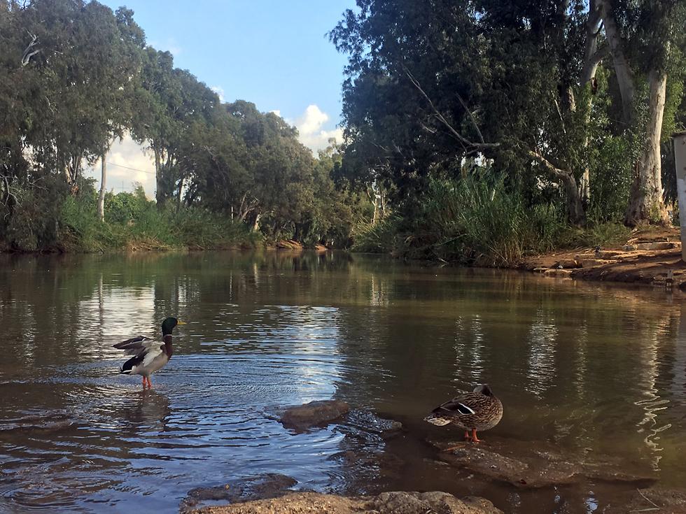 ברכיות ליד הסכר של שבע טחנות (צילום: גלעד כרמלי)