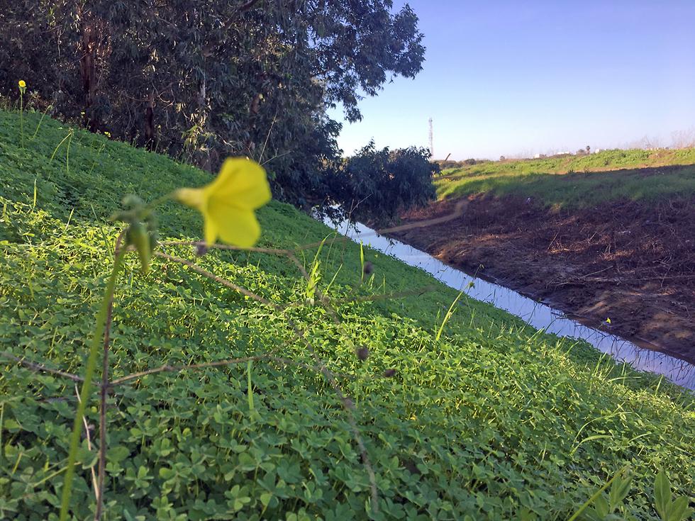 נחל אחיה ליד עמק הנרקיסים (צילום: גלעד כרמלי)